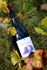 Gamay 203- Fermenterre-Victor Cossy