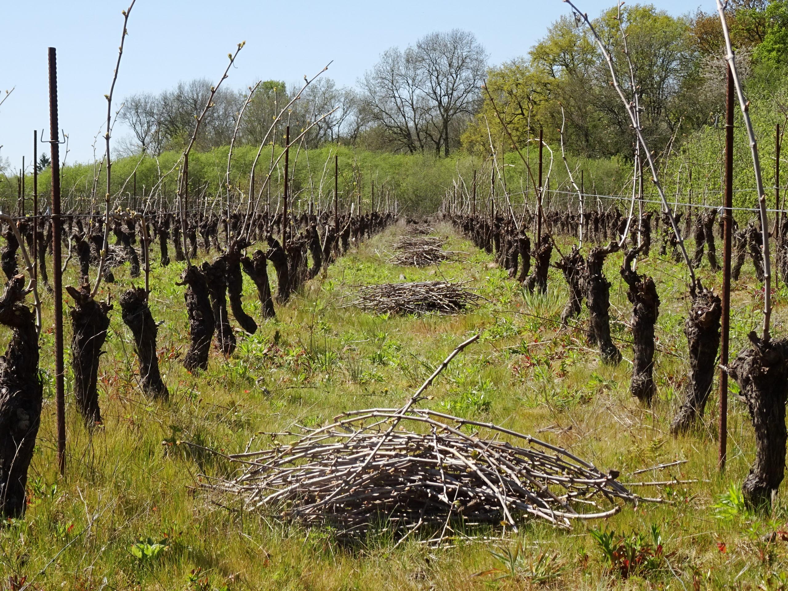 Fermenterre-taille de vigne